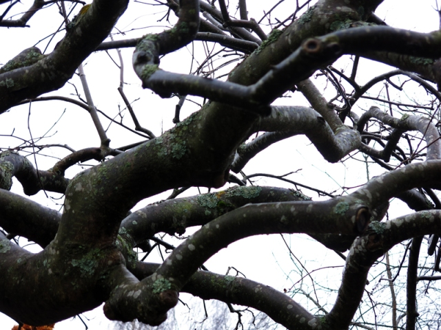 talvi16_17_12online